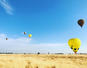field with blue skys and 5 hot air balloons floating through the air